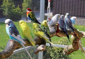 voliera fai da te per uccelli
